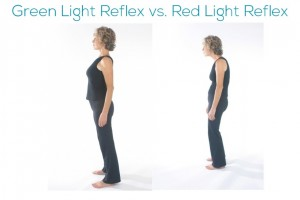 Green Light vs. Red Light Reflex